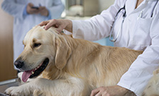 Regulatory Veterinary Colleges & Associations